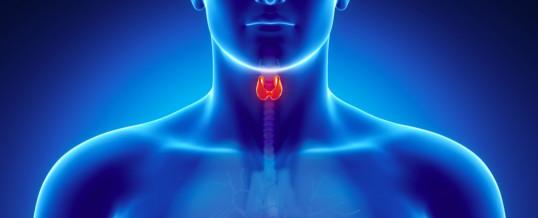 tiroide_piccola_ipotiroidismo_endocrinologiaoggi_roma-538x218